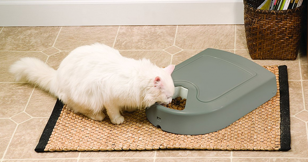 The best automatic cat feeders to keep your pet fed while you're away