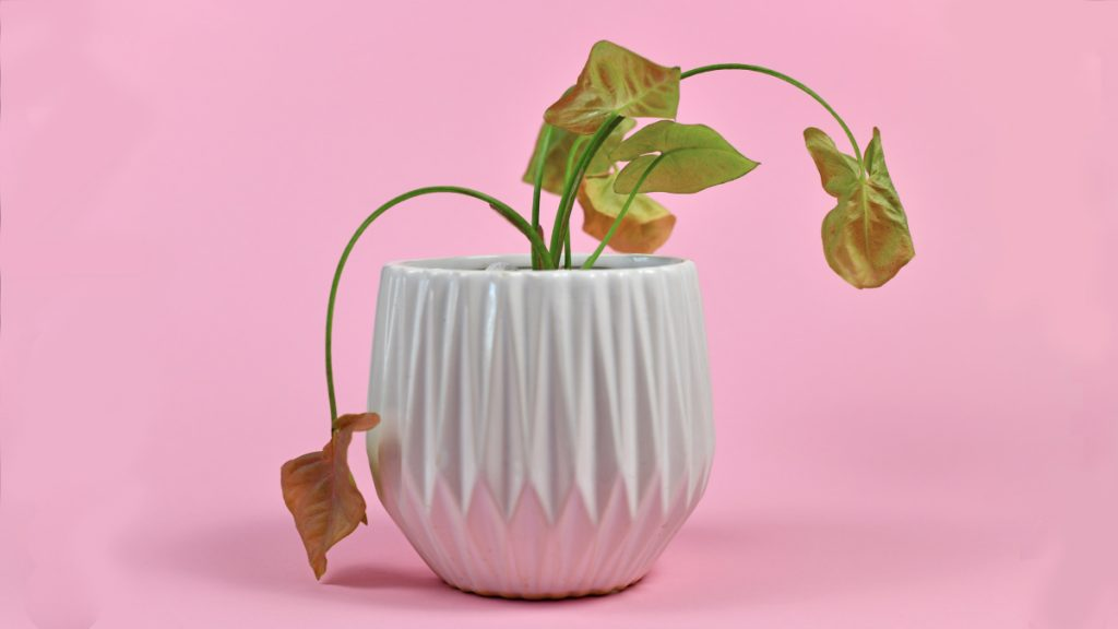 5 TikTok accounts to follow if your houseplants are dying