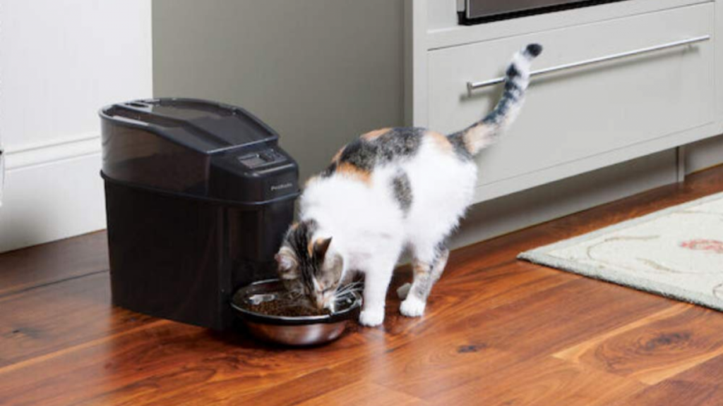 Best automatic cat feeders in 2021: The best pet feeders in the UK