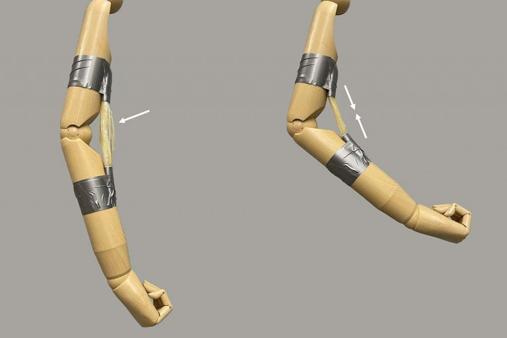 Wooden robot arm is powered by plastic muscles