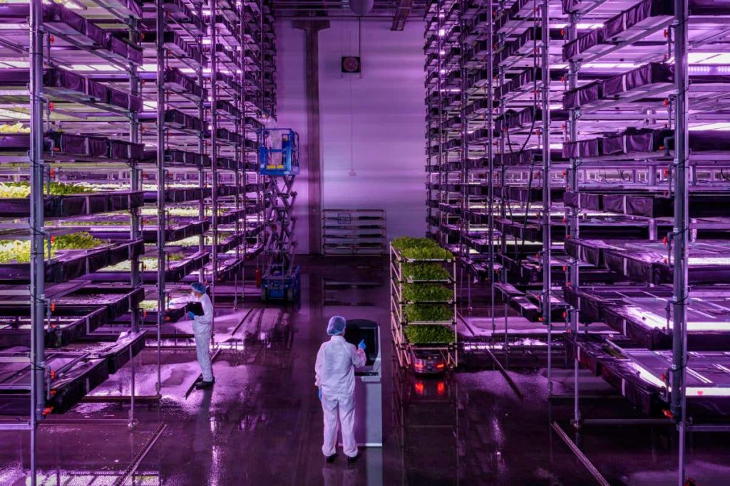 Futuristic farm may use 250 times less water than normal