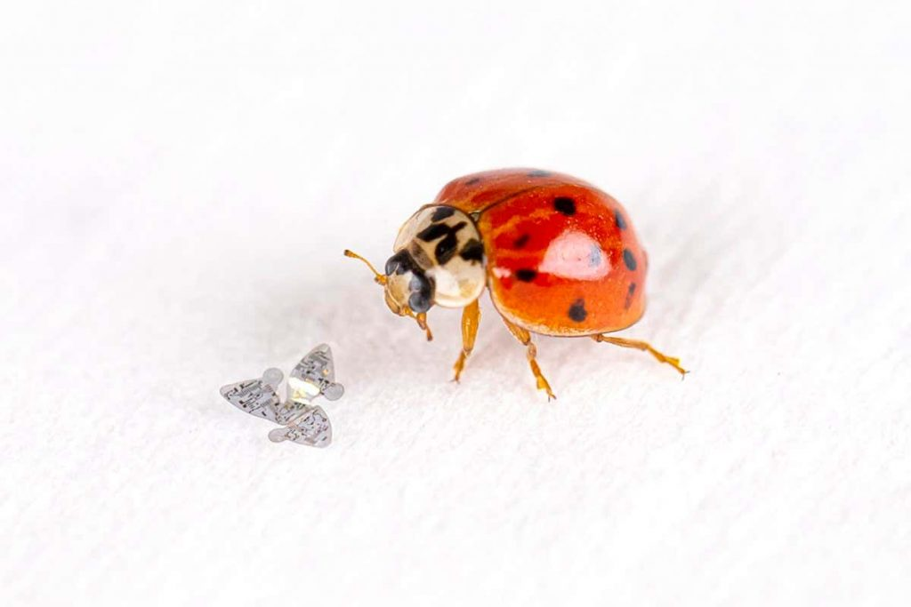 Tiny sensors inspired by gliding seeds could monitor the environment
